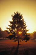 树木与阿萨努17