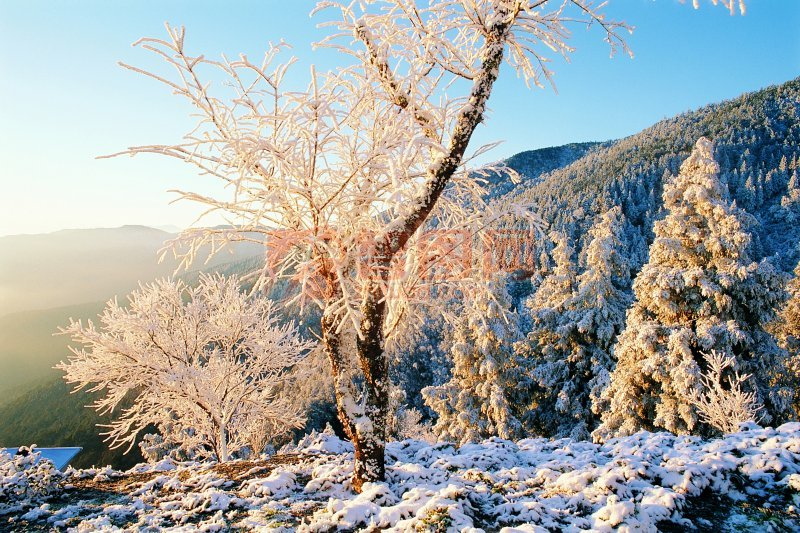 关键词: 绿树风景 山 雪景摄影 高清白色雪景 美丽雪景 冬天的雪景