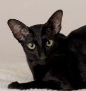 黑色猫咪01
