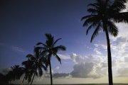 椰子树摄影
