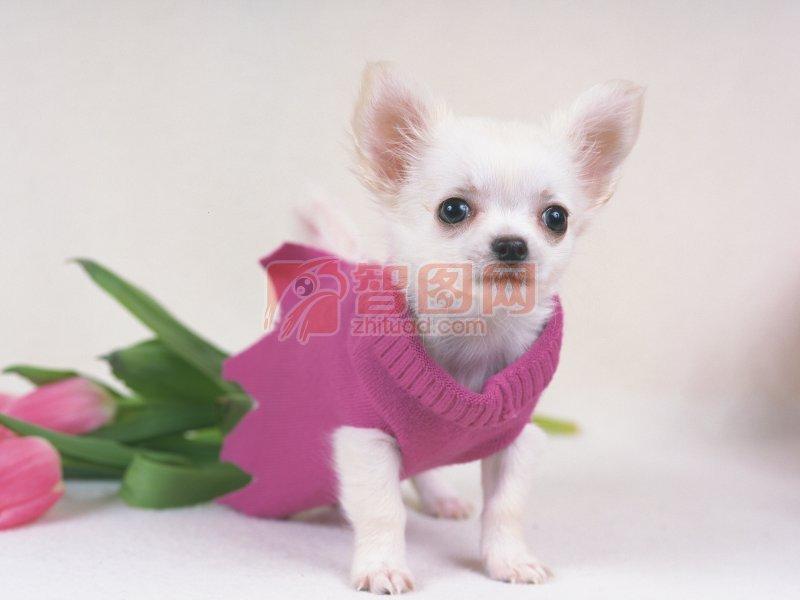 【jpg】穿衣服的小狗