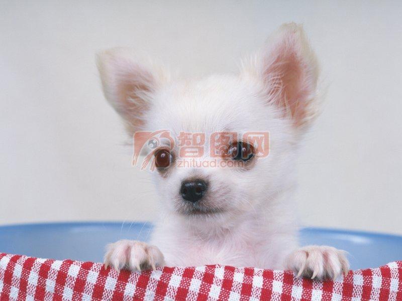 上一张图片:   可爱的两只小狗 下一张图片:穿衣服的小狗 分享到:qq