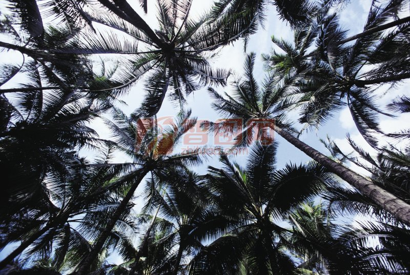 椰子树澳门永利赌场网址