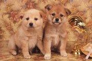 可爱的两只小狗