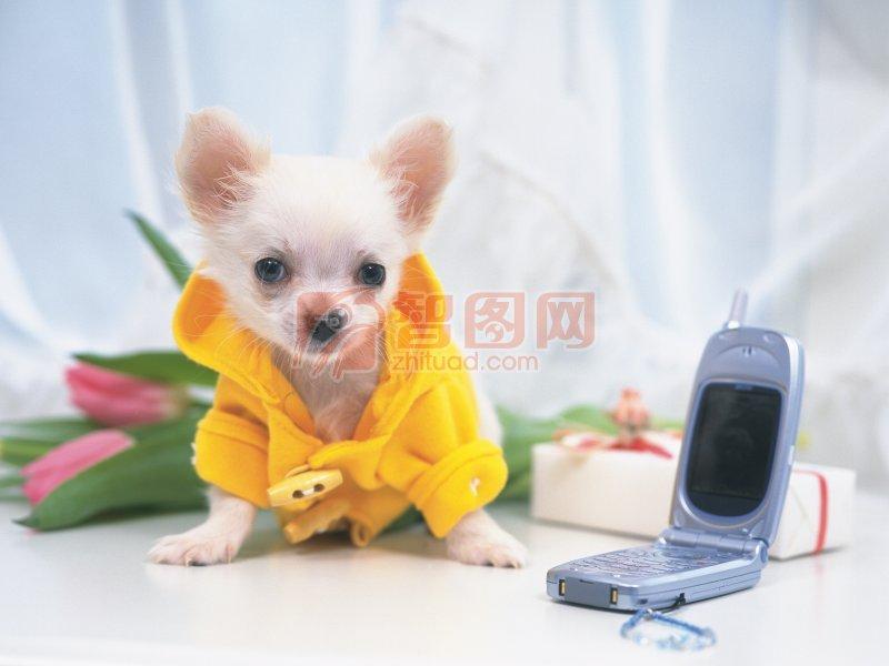 上一张图片:   披衣服的小狗 下一张图片:可爱的两只小狗 分享到:qq