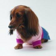 棕色宠物狗摄影元素