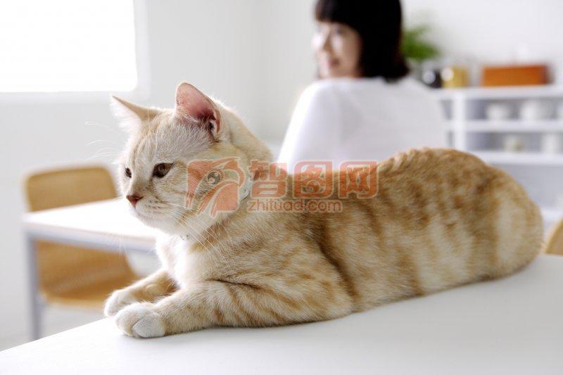 黄色猫咪元素