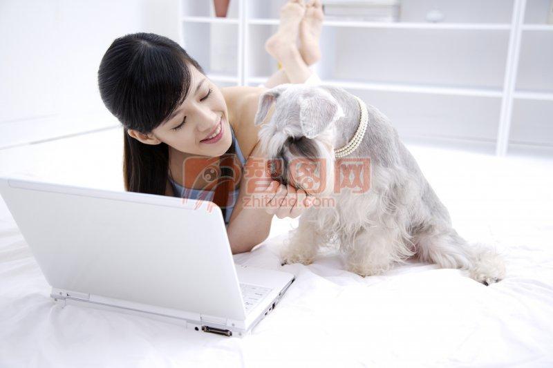灰色宠物狗元素