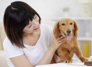 宠物狗素材2