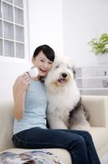 白色宠物狗2