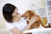 棕色宠物狗2
