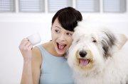白色宠物狗元素