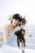 宠物狗摄影素材