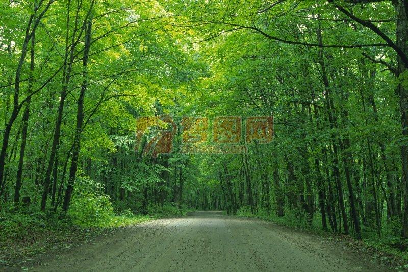 梦见树林 树木-周公解梦;
