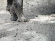 野生动物腿脚