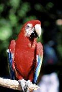 啄木鸟元素