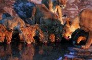 母狮子澳门永利赌场网址