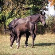 黑色骏马摄影