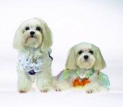 白色宠物狗素材14