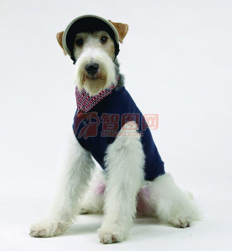 白色宠物狗素材11