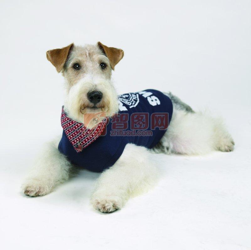 白色宠物狗素材10