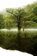遠山近水綠樹