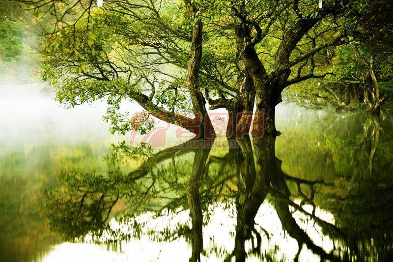 美麗湖邊風景