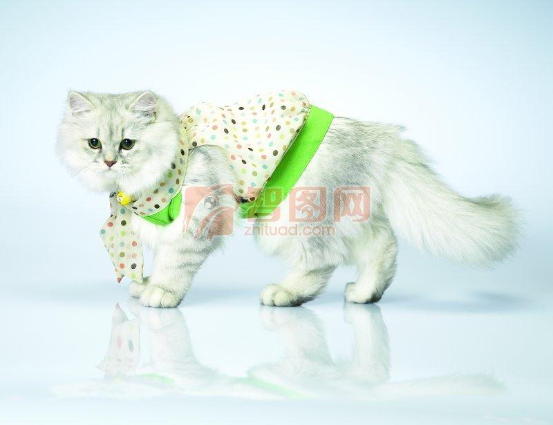 花格子衣服小猫