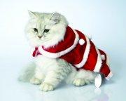 灰白色小猫