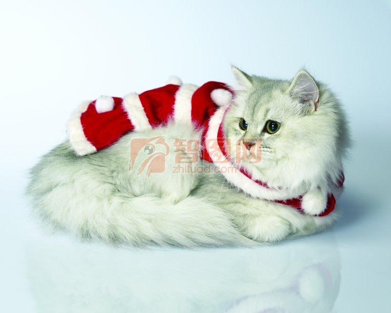 穿衣服的小猫