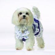 漂亮裙子小狗