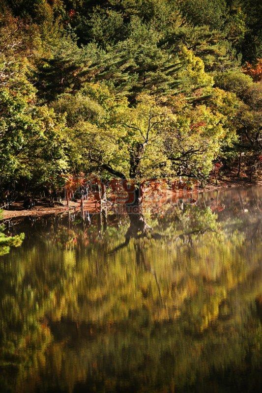 樹木攝影素材