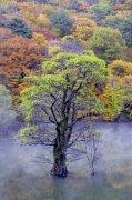 綠色樹木攝影