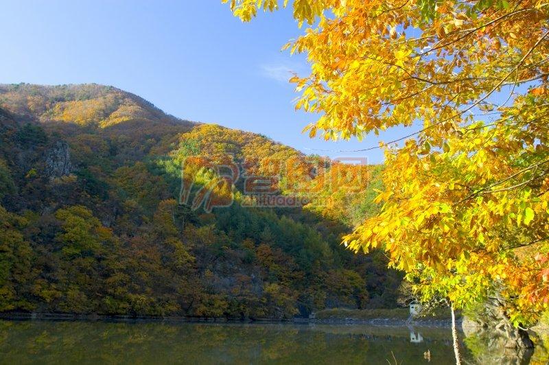 黃色樹木元素