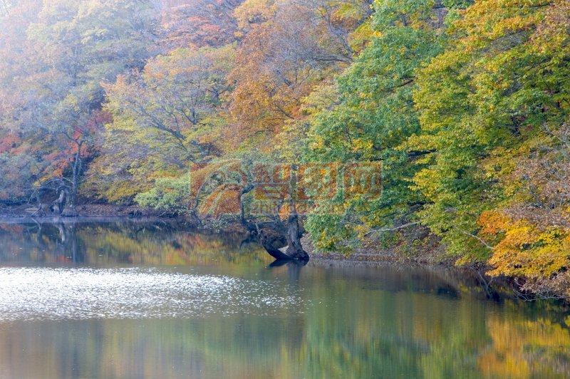 首页 摄影专区 生物世界 树木树叶  关键词: 高清树木 江水元素 黄色
