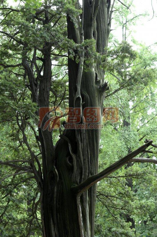 綠色樹木元素