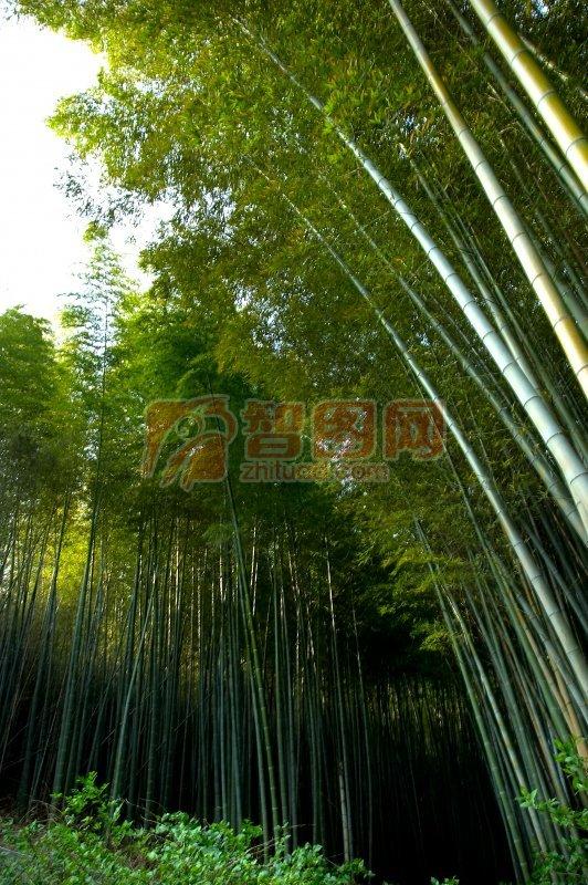 竹子素材攝影