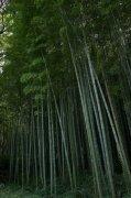 竹子攝影素材