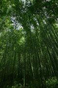 竹子攝影元素