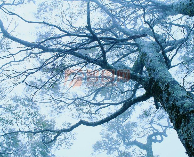 青灰色背景樹木