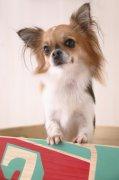 宠物狗摄影元素