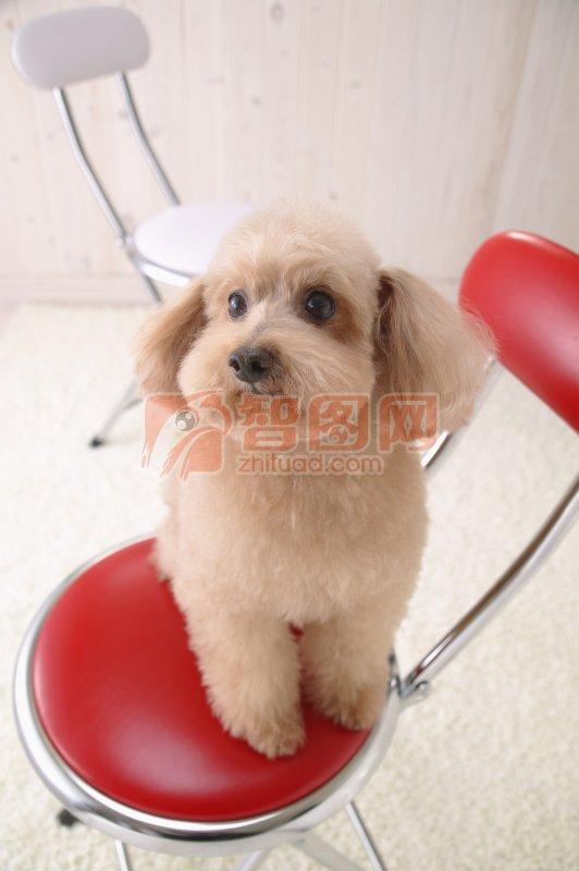 棕色宠物狗元素