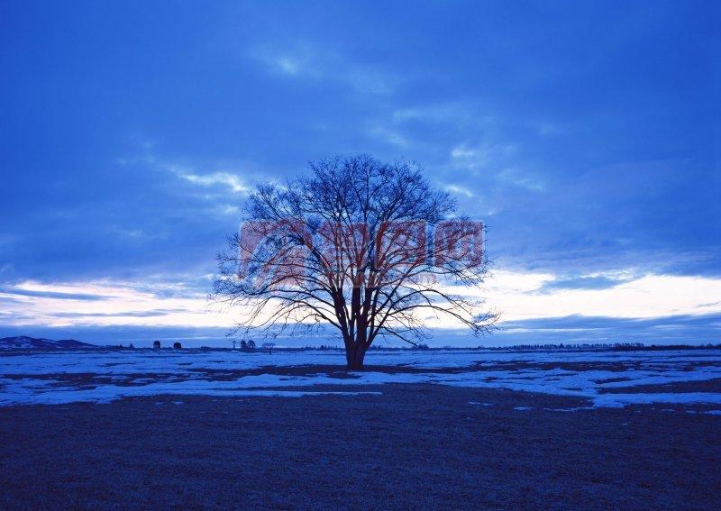 藍色背景樹木元素