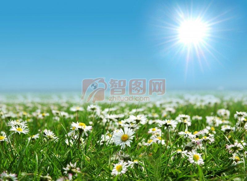 白色鮮花素材