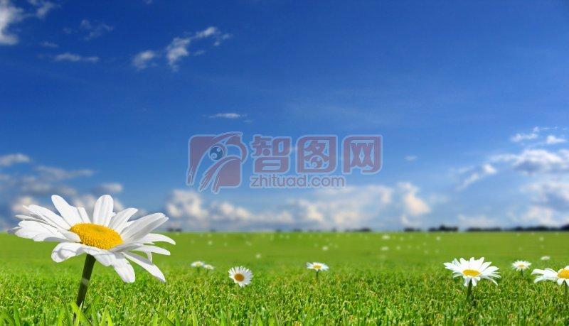 白色鮮花元素