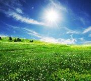 綠色草地元素