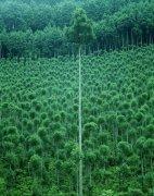 綠色樹林元素