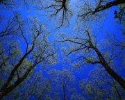 樹木素材攝影