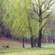樹木元素攝影