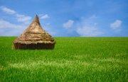 綠色草地素材